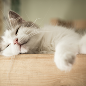 愛猫との生活に関するアンケート【Vol.39】