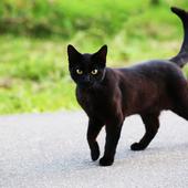 愛猫との生活に関するアンケート【Vol.42】