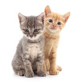 愛猫との生活に関するアンケート【Vol.43】