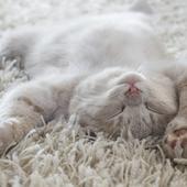 愛猫との生活に関するアンケート【Vol.44】
