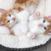 愛猫との生活に関するアンケート【Vol.45】