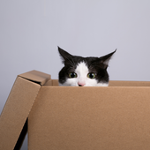 愛猫との生活に関するアンケート【Vol.46】