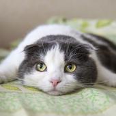 愛猫との生活に関するアンケート【Vol.47】