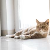 愛猫との生活に関するアンケート【Vol.48】