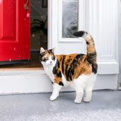 愛猫との生活に関するアンケート【Vol.49】