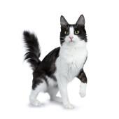 愛猫とのクリスマスに関するアンケート