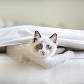 愛猫との生活に関するアンケート【Vol.54】
