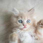 愛猫との生活に関するアンケート【Vol.55】