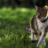 愛猫との生活に関するアンケート【Vol.56】