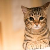 愛猫との生活に関するアンケート【Vol.57】