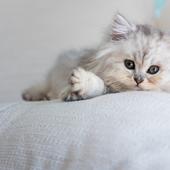 愛猫との生活に関するアンケート【Vol.58】