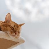 愛猫との生活に関するアンケート【Vol.59】