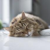 愛猫との生活に関するアンケート【Vol.60】