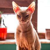 愛猫との生活に関するアンケート【Vol.63】