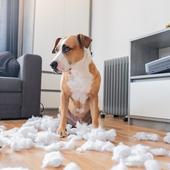犬:アンケートしたいことを大募集!