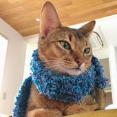 愛猫との生活に関するアンケート【交流編】