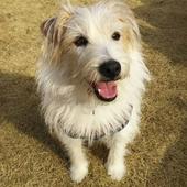 愛犬との生活に関するアンケート【室内・室外飼い編】