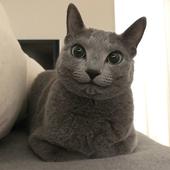 """ねこのきもちWeb編集室より """"愛猫の名前""""アンケート実施中!"""