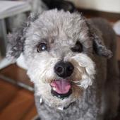 愛犬との生活に関するアンケート