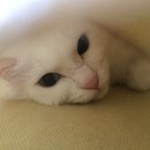 猫の飼育に関するアンケート