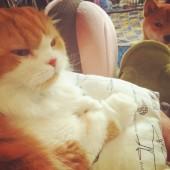 猫飼いさん聞きたい!猫の魅力について