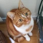 猫グッズに関するアンケート