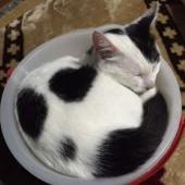 猫グッズに関するアンケート Part2
