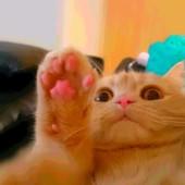 愛猫の体重管理についてのアンケート