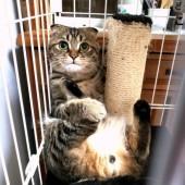 愛猫の行動に関するアンケート