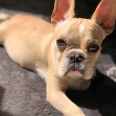 「犬あるある」に関するアンケート
