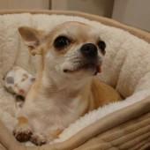 犬の飼い主さんの体験談に関するアンケート