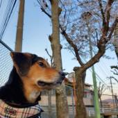 犬の散歩に関するアンケートvol.01
