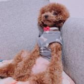 犬との不思議な体験に関するアンケートvol.01