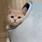 猫の行動に関するアンケートvol.01