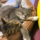 猫のハプニングに関するアンケートvol.01