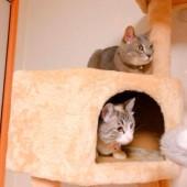 猫との不思議な体験に関するアンケートvol.01
