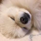 「犬飼いあるある」に関するアンケートvol.02