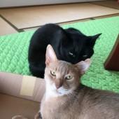 「猫飼いあるある」に関するアンケートvol.02