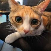 「猫あるある」に関するアンケートvol.06
