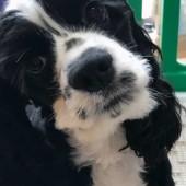 犬のハプニングに関するアンケートvol.01