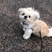 犬の飼い主さんのトラブルに関するアンケートvol.01
