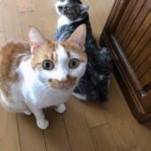 猫の防災に関するアンケートvol.01