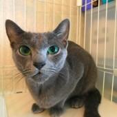 猫の防災に関するアンケートvol.02