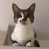 猫のおもちゃに関するアンケート