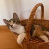 愛猫とのステイホームの生活に関して