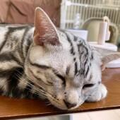 猫の「生態・行動」に関するアンケートvol.01