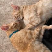 「猫飼いあるある」に関するアンケートvol.04