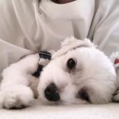愛犬のニオイに関するアンケート