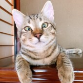 猫の避妊手術に関するアンケートです。