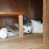 猫の脱走に関するアンケートです。